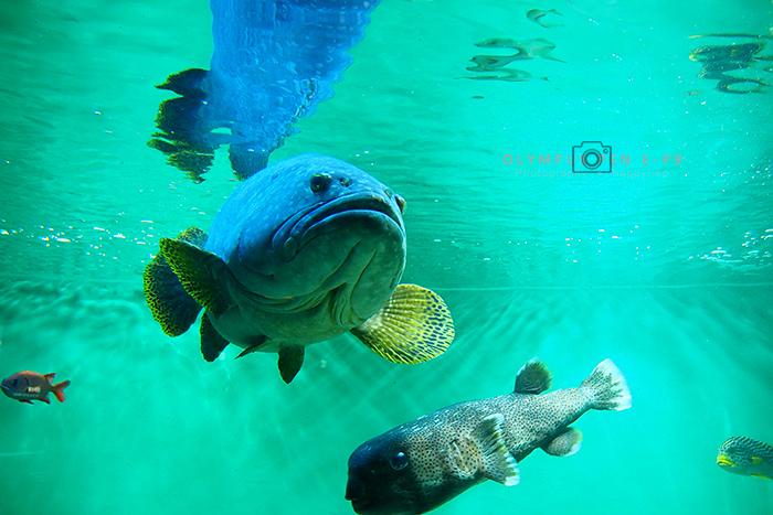 葛西臨海公園水族館_b0049843_10473334.jpg