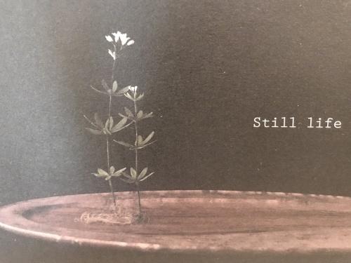「still life」展示会_e0288544_12535367.jpg