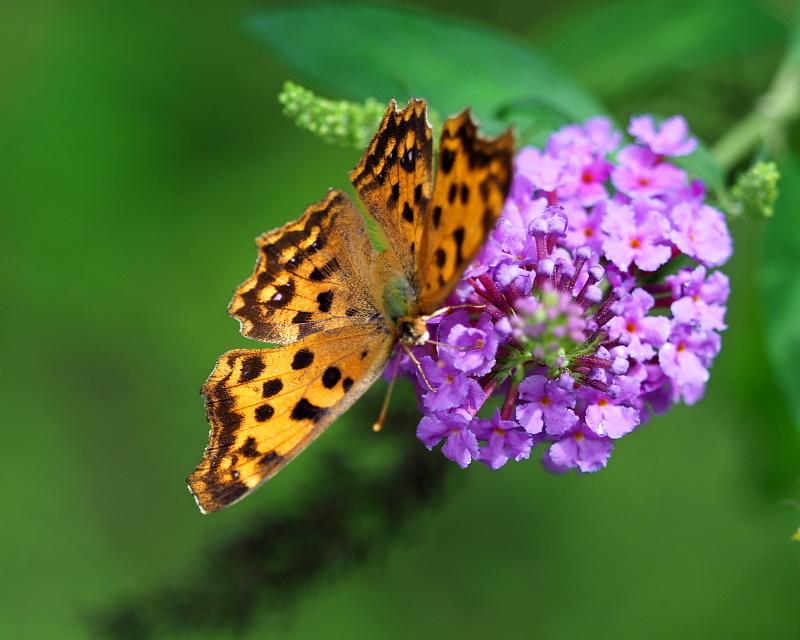フラワーパークで 虫撮り・花撮り_c0305565_17393971.jpg