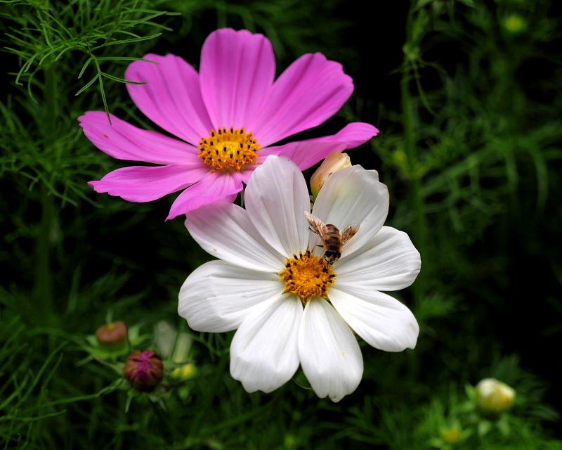 フラワーパークで 虫撮り・花撮り_c0305565_17420791.jpg