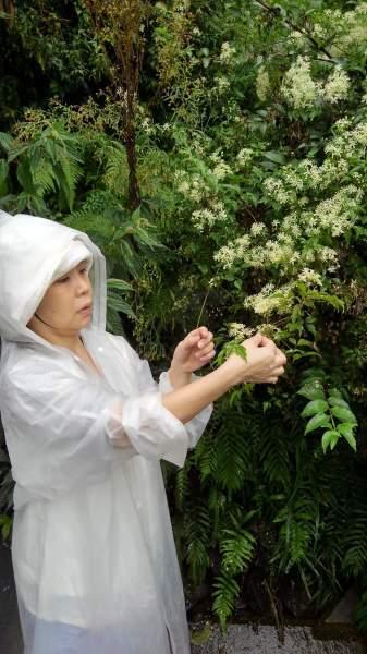 フラワーエッセンスの花の群生地を見に行こう〜無事終わって_e0257524_11563114.jpeg