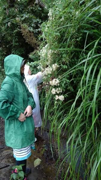 フラワーエッセンスの花の群生地を見に行こう〜無事終わって_e0257524_11565449.jpeg