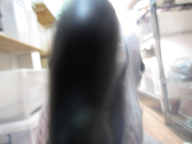 e0211781_18290109.jpg