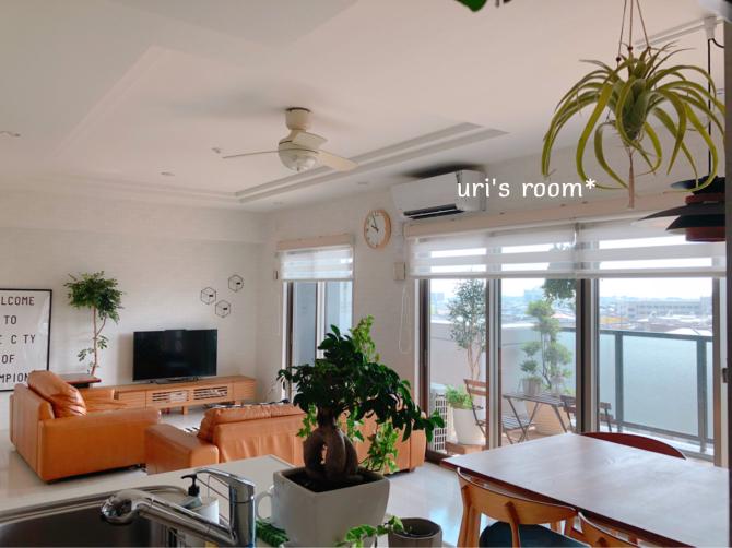 天井からのインテリアグリーンの吊るし方について。_a0341288_23401075.jpg