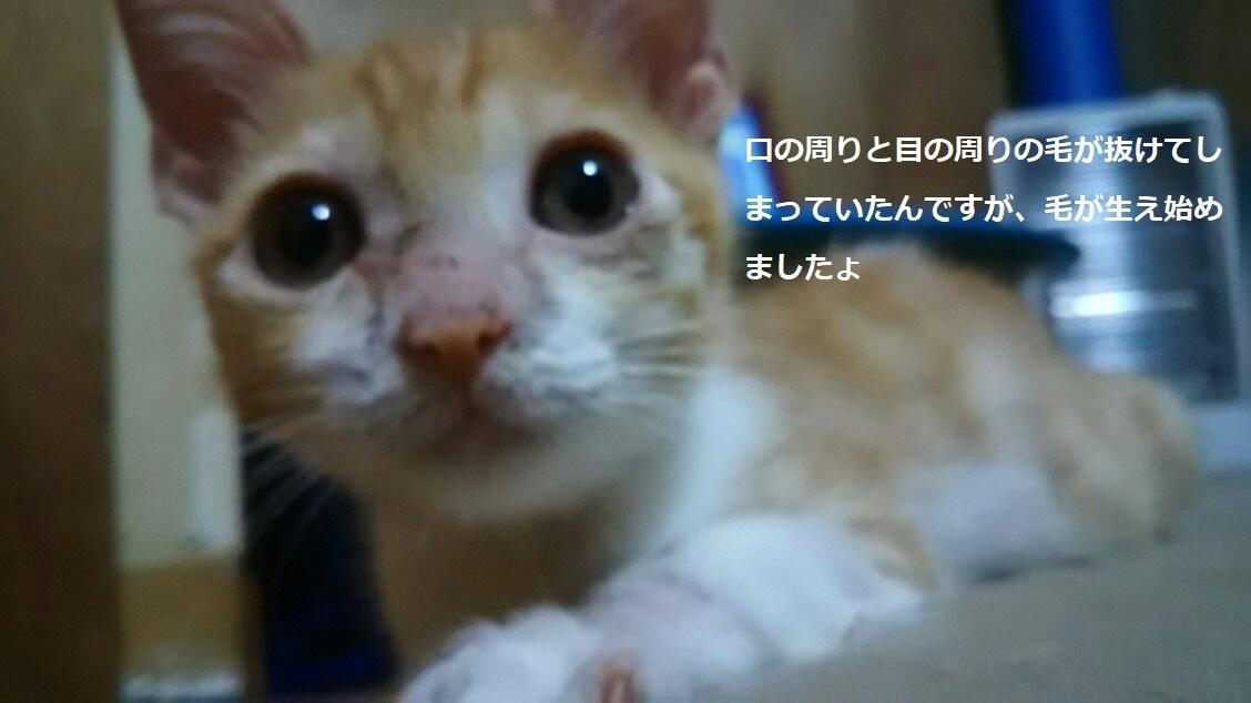 ぽっぽくんはもうしばらくお休み_f0242002_00151758.jpg