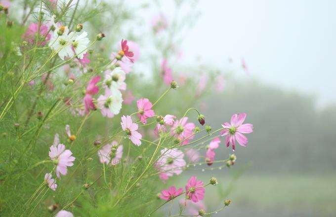 霧の中_f0091207_00405218.jpg