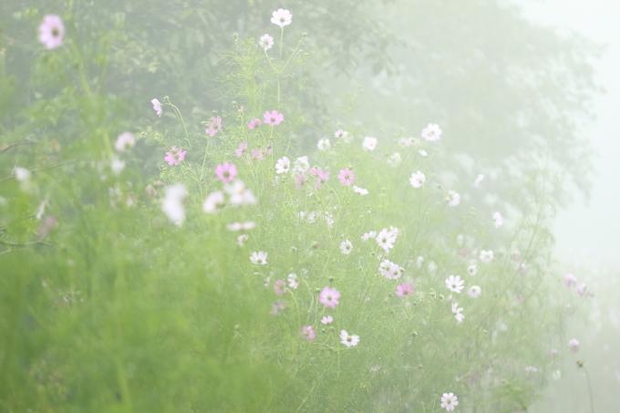 霧の中_f0091207_00405352.jpg