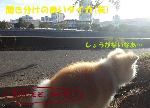 f0121712_13255438.jpg