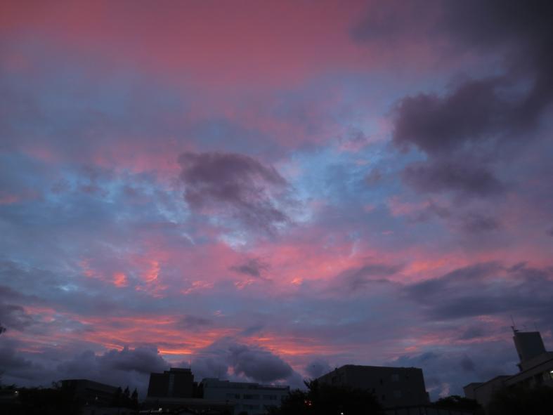 ■紫式部か小紫か──週替わりの夕暮れ[9/9]_d0190217_21045483.jpg