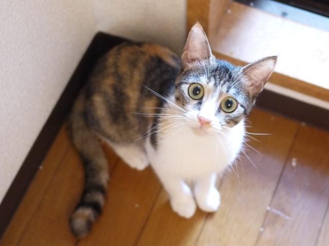 猫のお留守番 月ちゃん編。_a0143140_21482771.jpg