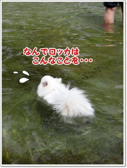 d0013149_00282367.jpg