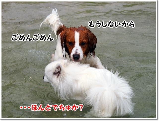 d0013149_00284748.jpg