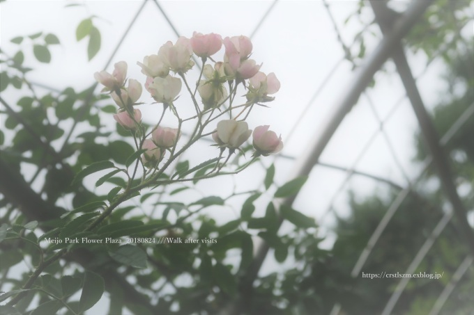ひとやすみ_e0348754_11000950.jpg