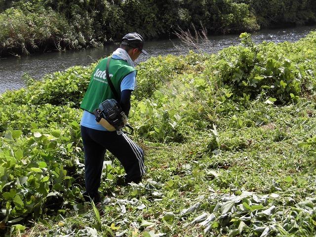 これから花を咲かせるヒガンバナがきれいに見えるよう「滝川の草刈り清掃」に80名が参加!_f0141310_07570090.jpg