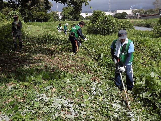 これから花を咲かせるヒガンバナがきれいに見えるよう「滝川の草刈り清掃」に80名が参加!_f0141310_07571326.jpg