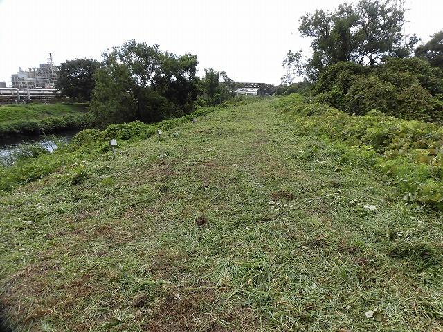 これから花を咲かせるヒガンバナがきれいに見えるよう「滝川の草刈り清掃」に80名が参加!_f0141310_07573534.jpg