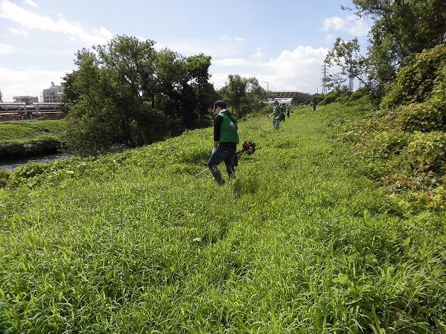 これから花を咲かせるヒガンバナがきれいに見えるよう「滝川の草刈り清掃」に80名が参加!_f0141310_07574362.jpg