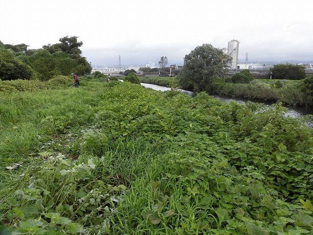 これから花を咲かせるヒガンバナがきれいに見えるよう「滝川の草刈り清掃」に80名が参加!_f0141310_07574959.jpg