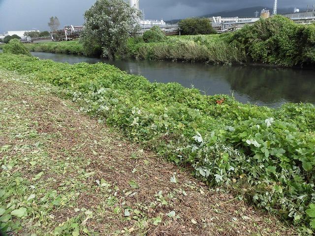 これから花を咲かせるヒガンバナがきれいに見えるよう「滝川の草刈り清掃」に80名が参加!_f0141310_07581096.jpg