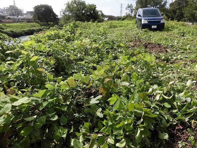 これから花を咲かせるヒガンバナがきれいに見えるよう「滝川の草刈り清掃」に80名が参加!_f0141310_07582697.jpg