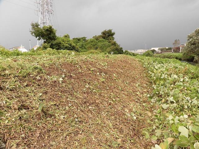 これから花を咲かせるヒガンバナがきれいに見えるよう「滝川の草刈り清掃」に80名が参加!_f0141310_07585233.jpg