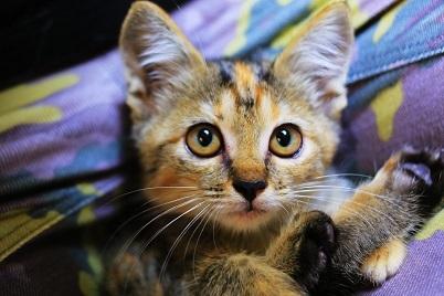 猫に小判_e0241944_15453046.jpg