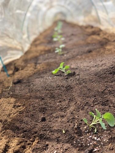 今朝からブロッコリーの定植です_c0222448_11482068.jpg