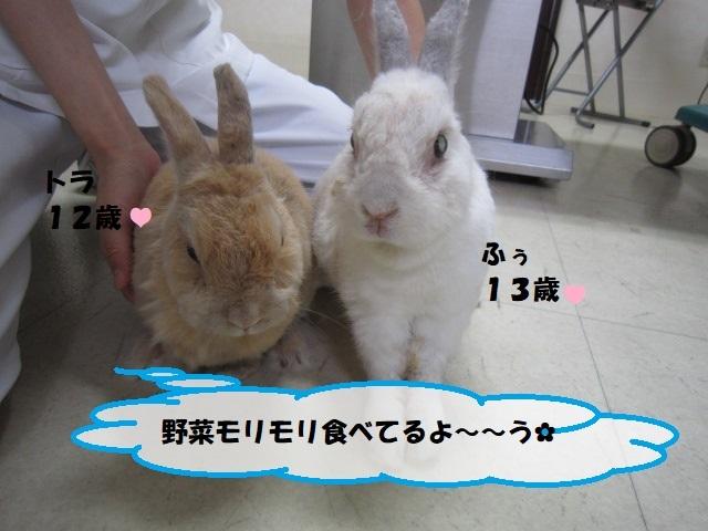 【こちらの2匹すごいんです!!】_b0059154_15272971.jpg