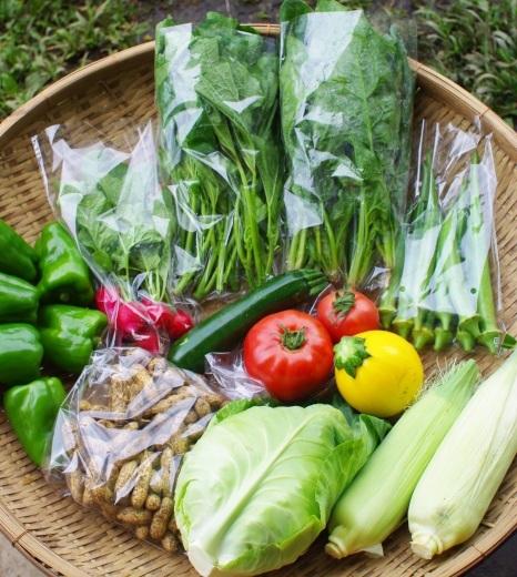 今週の野菜セット(9/11~9/15着)_c0110869_12044746.jpg
