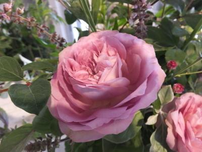 オークリーフ花の教室(大草さんと清水さんの作品)_f0049672_17000565.jpg