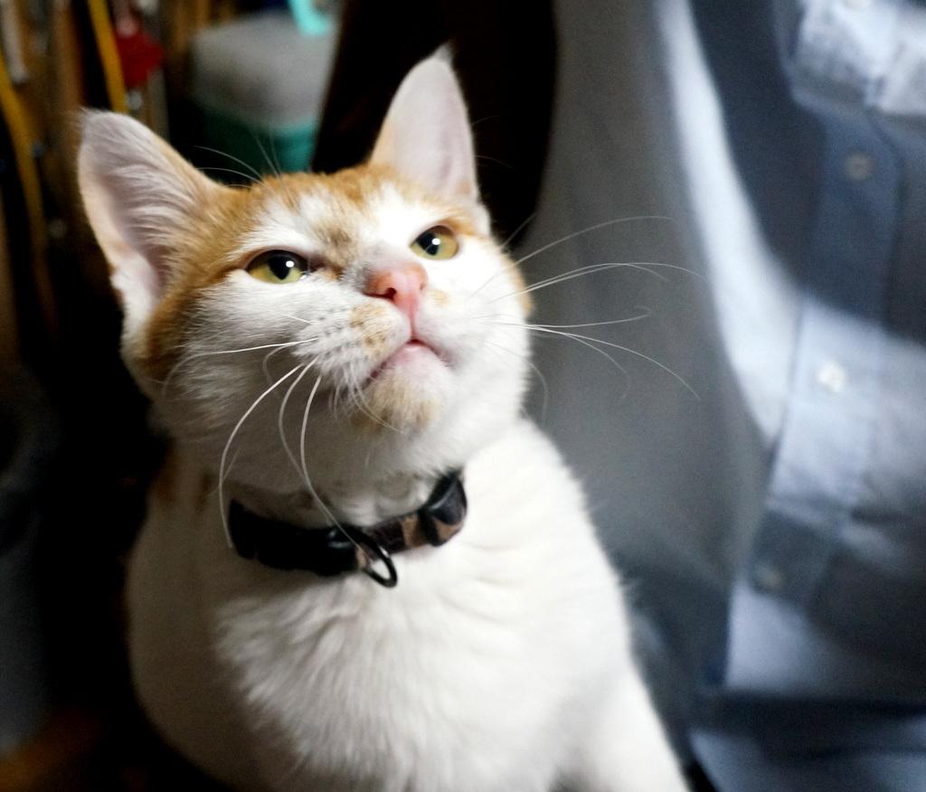 御大邸の子猫フジ。_c0180686_07385660.jpg