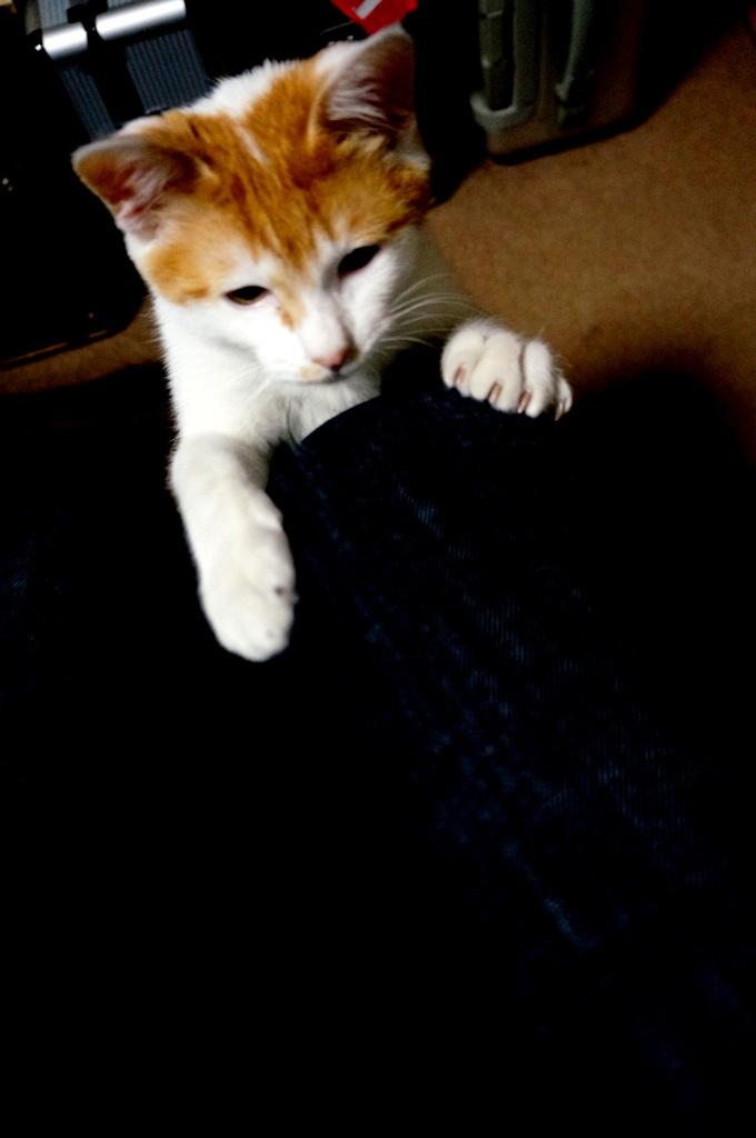 御大邸の子猫フジ。_c0180686_07390391.jpg