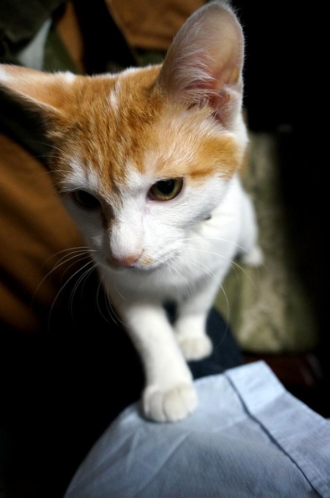 御大邸の子猫フジ。_c0180686_07400742.jpg