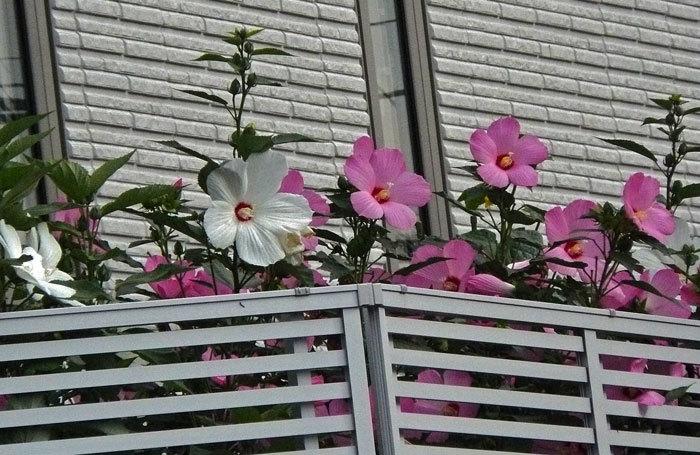 花・いろいろ_d0162994_08454118.jpg