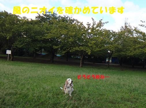 f0121712_14013199.jpg