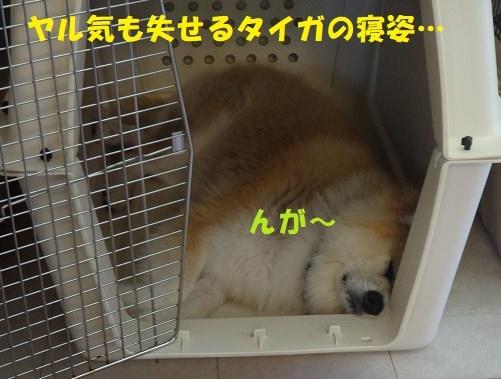 f0121712_14460500.jpg