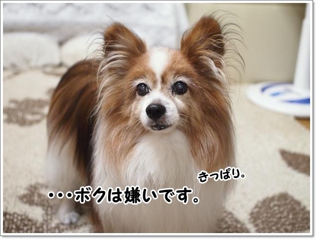 d0013149_00213590.jpg