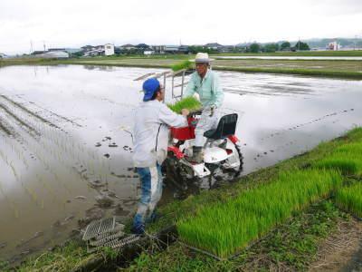無農薬栽培のひのひかり100%使用の『米粉』大好評販売中!平成30年度のお米も元気に成長中!_a0254656_18000221.jpg