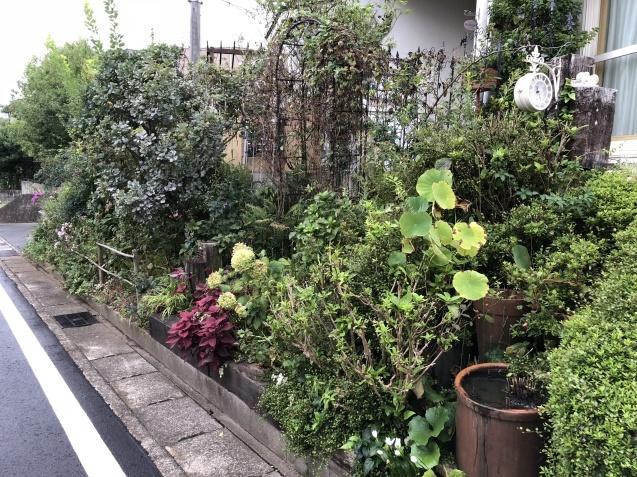 台風後の庭「家の外回り」_a0243064_18260479.jpg