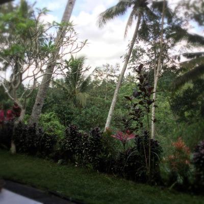 """バリ島☆神さまへのお供え物""""チャナン""""をつくりましょうね_d0035397_23014399.jpeg"""