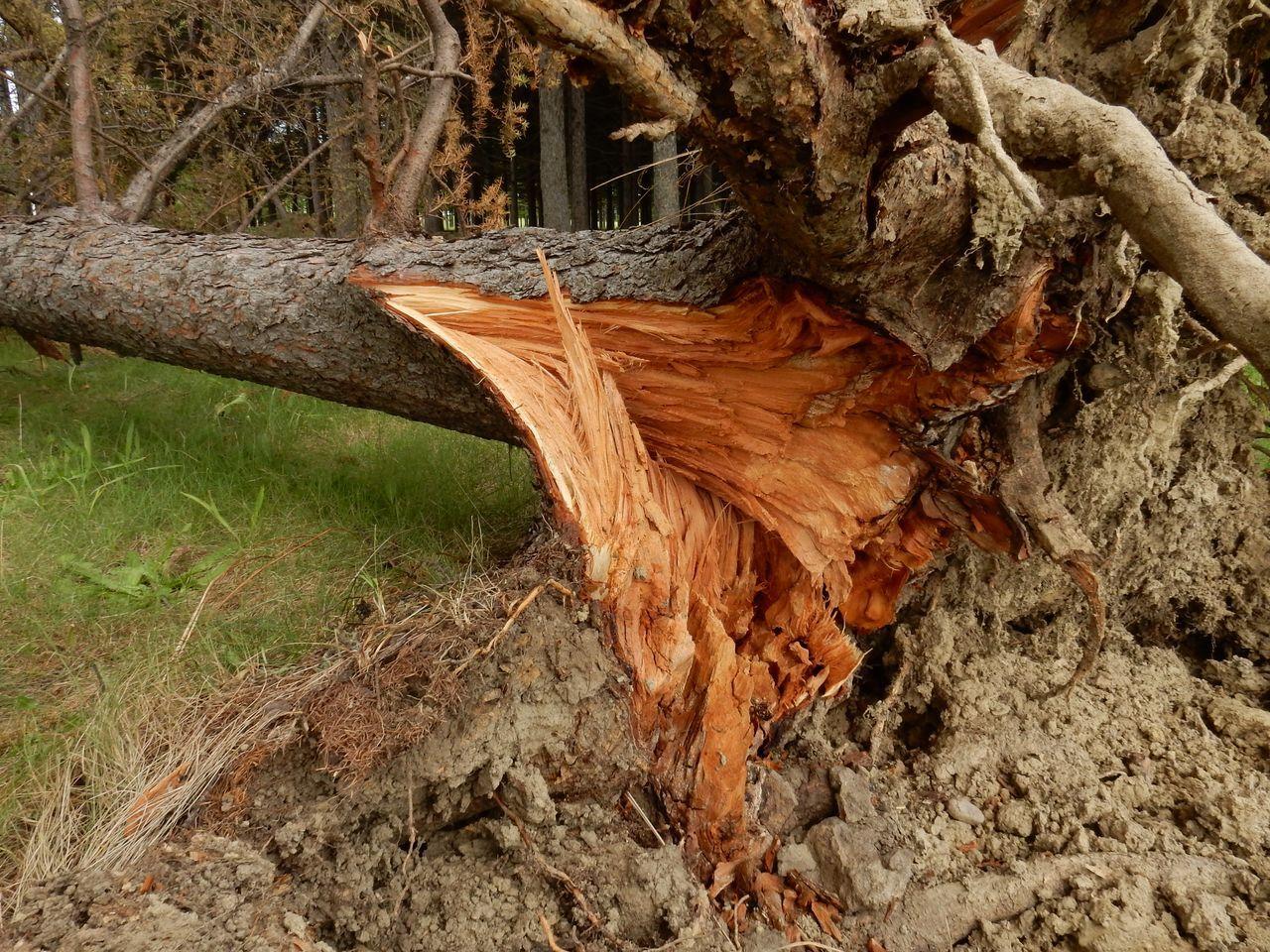 モエレ沼公園とさとらんどは台風被害_c0025115_21471202.jpg