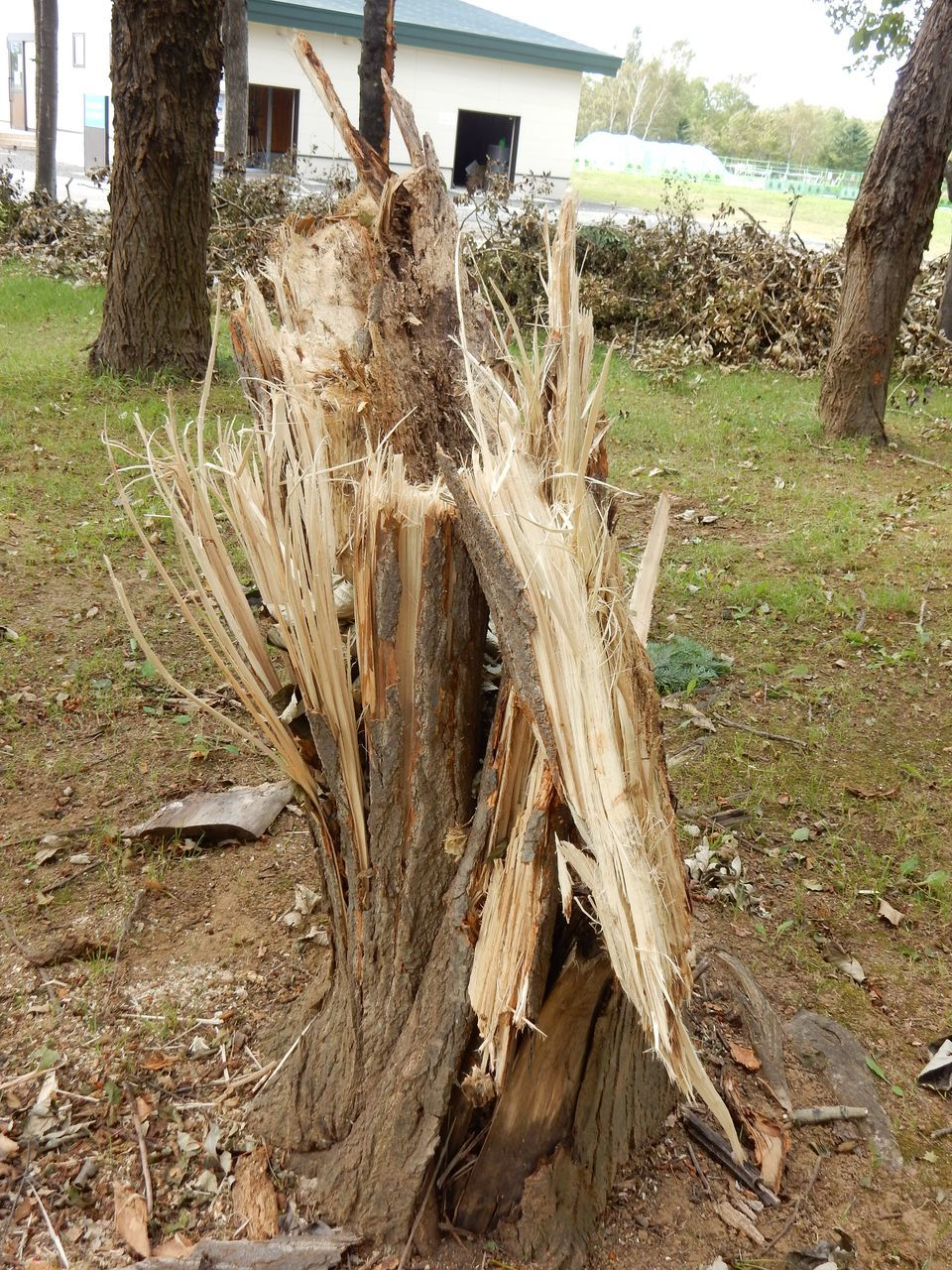 モエレ沼公園とさとらんどは台風被害_c0025115_22072756.jpg
