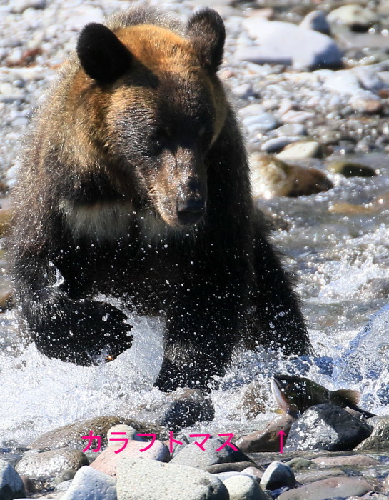 北海道の季節 おでかけしよう^^_c0229170_04464529.jpg