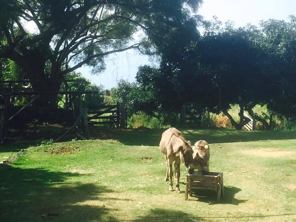 ハワイ島のコーヒー農園にて 〜自然とともにありのままに、本当のシンプルライフ〜_a0283079_00165390.jpg