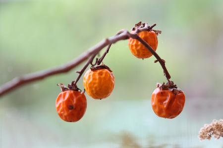 秋になってしまった、、、。_e0238211_22245068.jpg