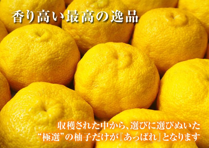 香り高き柚子(ゆず) 令和元年度の香り高き『青柚子』本日より出荷スタート!大好評販売中!!_a0254656_17161031.jpg