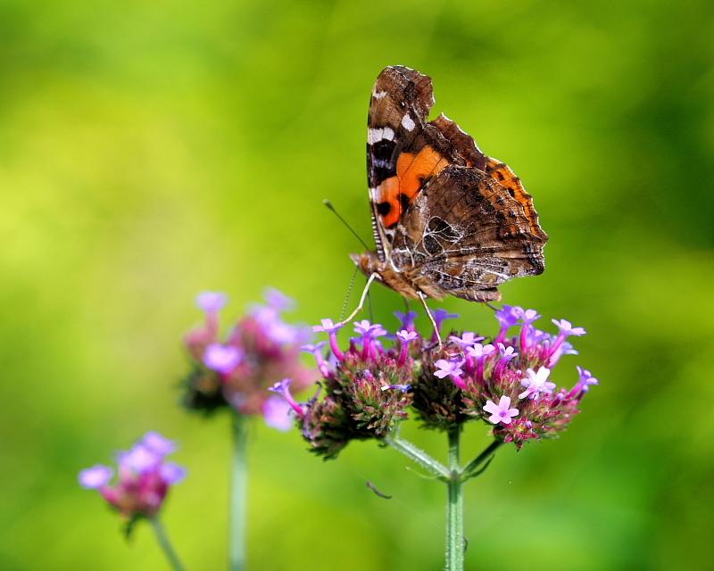 ガーデンで チョウや実など_c0305565_17385274.jpg