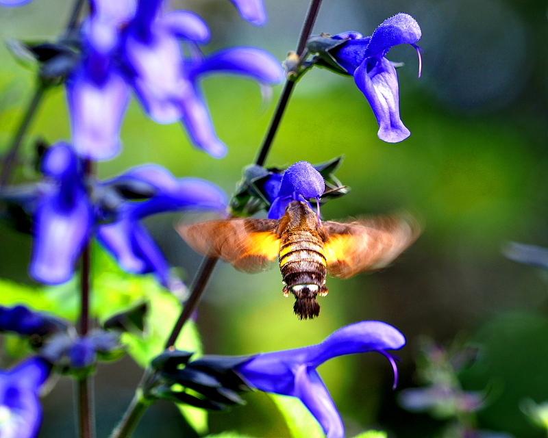 ガーデンで チョウや実など_c0305565_17390872.jpg