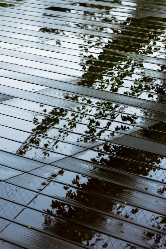 雨のオープンテラスと 沖縄スズメウリ_a0261169_21492208.jpg