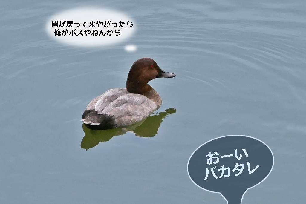 b0174191_16510107.jpg